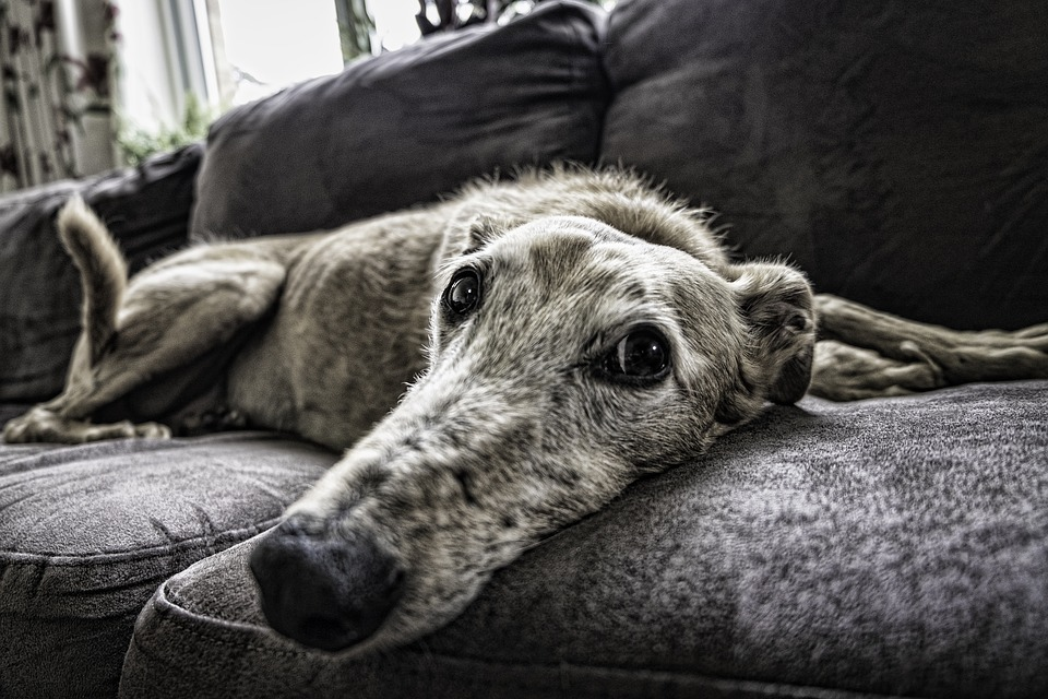 hondengeur verwijderen