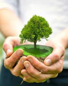 boom-in-handen