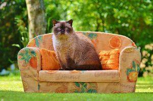 Kat op bank